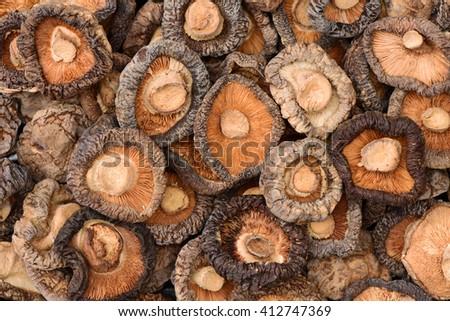 Closeup group of dried mushroom background - stock photo