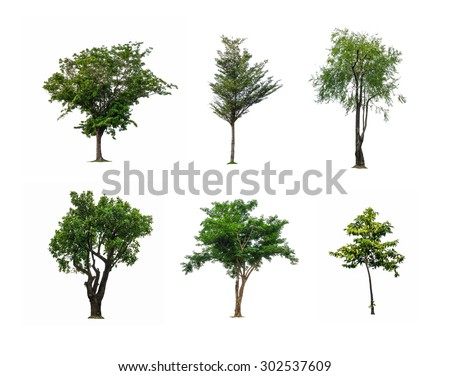 Closeup group of green tree isolated on white background , beautiful six tree in one pic - stock photo