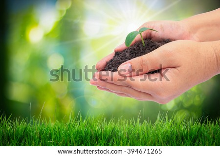 Closeup hand holding baby plant over nature background,save the earth concept - stock photo