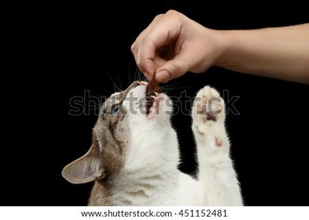 Domestic Cat Profile S...