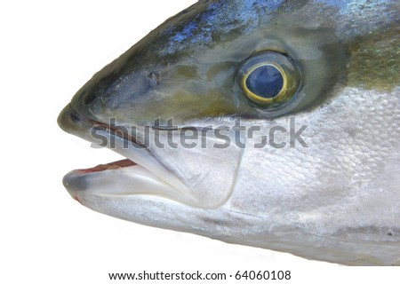 Closeup head of yellowtail fish isolated on white background