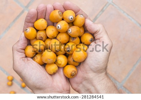 Closeup high angle looking down of two hands cupped to hold scoop of fresh ripe orange Syagrus Romanzoffiana queen palm dates over blurred background of Mexican tiles - stock photo