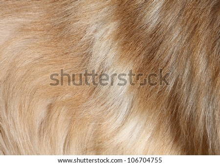 Closeup high definition image of textured dog hair. - stock photo