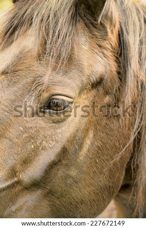 Closeup image of a brown horse head. - stock photo