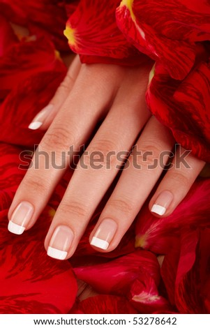 Closeup image of a woman's hand in petals of a rose - stock photo