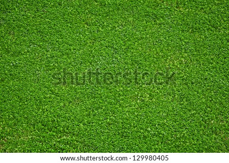 Closeup image of fresh spring green grass - stock photo