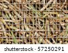 "Closeup image of freshly harvested sugar cane on a cane train ""bin"" on the way to the sugar mill - stock photo"