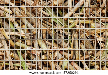 """Closeup image of freshly harvested sugar cane on a cane train """"bin"""" on the way to the sugar mill - stock photo"""