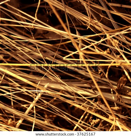 Closeup image of hay - stock photo