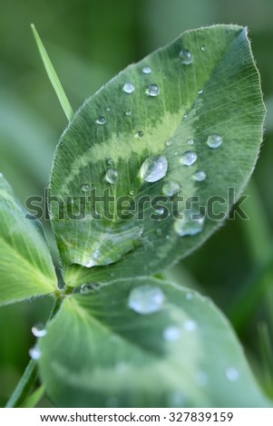 Closeup indoor natural fresh green leaf plant with many shiny transparent drops of water dew raindrops against green background, vertical picture - stock photo