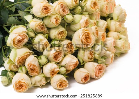 Closeup isolated bunch of peach shrub roses on a white background - stock photo