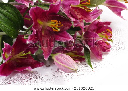 Closeup isolated bunch of purple lilies on a white background with water drops - stock photo