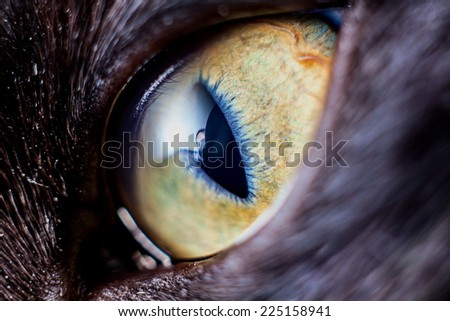 Closeup kitten eye - stock photo
