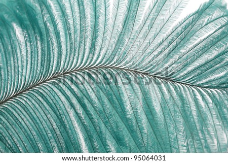 closeup large turquoise feather showing detail - stock photo