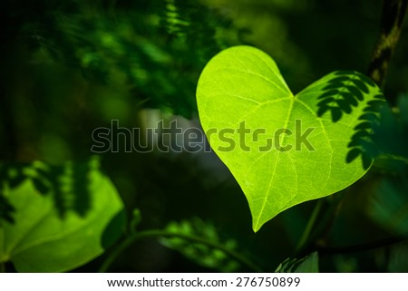 Closeup leaf like a heart shape in the forest - stock photo