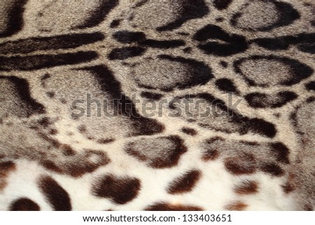 Closeup leopard hair for background use