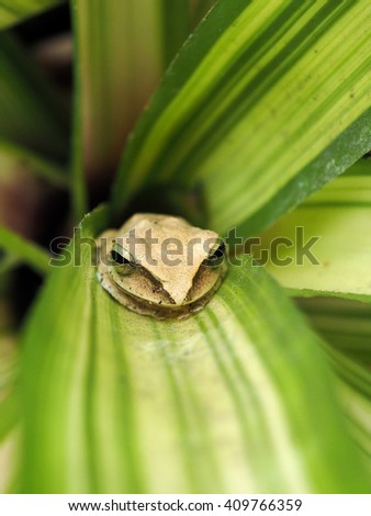Closeup little frog on plant - stock photo