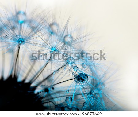 Closeup macro detail of dandelion, soft focus - stock photo