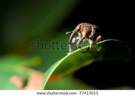 Closeup macro image of a bug lives on green leaf. - stock photo
