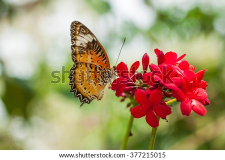 Closeup, macro photo beautiful butterfly colorful wing eating on red flower with blur background - stock photo
