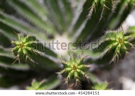 Closeup macro photos of potted cactus plants from rain forest tropical zone,focus on spike and pattern textured of the plants in selective soft focus,blurred for background with toned color,lighting - stock photo