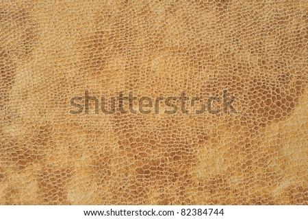 Closeup macro snake texture. Stress, brown background concept. - stock photo