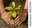 Closeup male hands and tree ground plant - stock photo