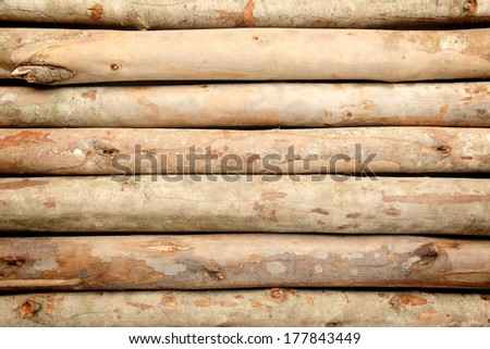 closeup nature texture of eucalyptus wood - stock photo