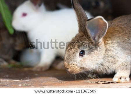 Closeup of a baby rabbit in a hutch - stock photo