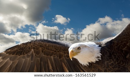 closeup of a bald eagle flying in a cloudy sky with room for text