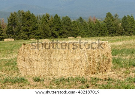 Closeup of a bale of straw in a  field