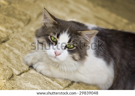 Closeup of a beautiful cat with green eyes