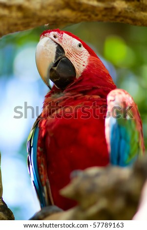 Closeup of a beautiful colorful macaw in natural environment