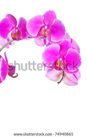 Closeup of a beautiful purple orchid flowers isolated on a white background