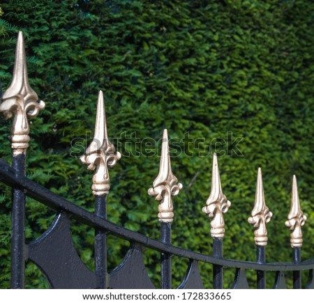 Closeup of a black painted wrought iron fence with gold painted spikes in front of a conifer hedge. - stock photo