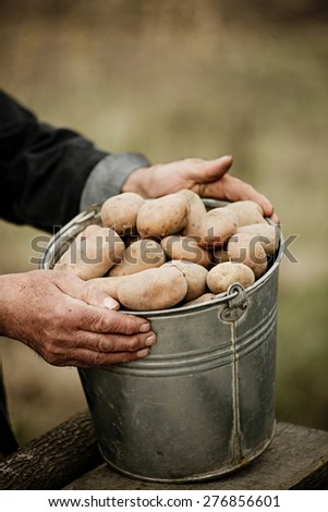 Closeup of a bucket of potatoes in the hands of the farmer on the background of the garden - stock photo