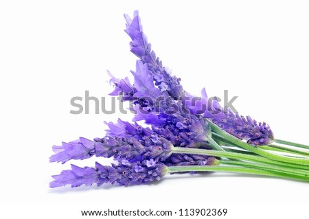closeup of a bunch of lavender flowers on a white background - stock photo