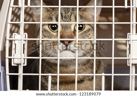 Closeup of a cat looking through the bars of a cage - stock photo