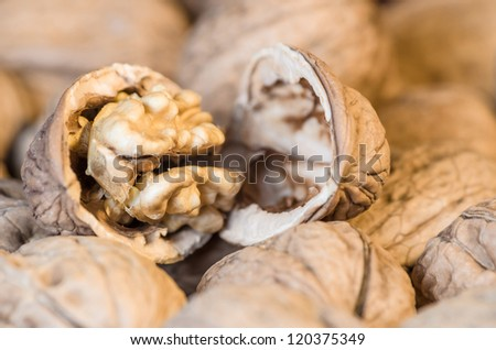 Closeup of a cracked walnut, resting on a background of unopened walnuts, with intentional shallow depth of field - stock photo