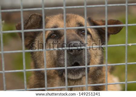 Closeup of a dog looking through the bars of a cage  - stock photo