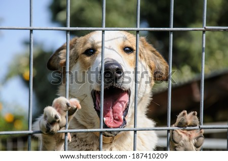 Closeup of a dog looking through the bars of a fance, outdoor - stock photo