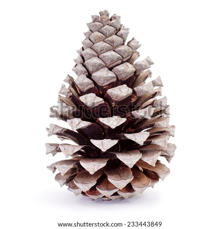 closeup of a dried pine cone on a white background - stock photo
