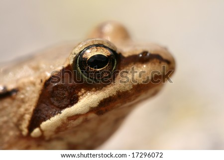 Closeup of a frog
