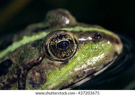 Closeup of a frog in nature - stock photo