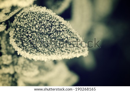 closeup of a frost leaves in winter, Pyrenees, Spain. - stock photo