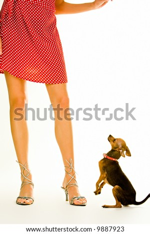 Closeup of a girl's legs standing with a small dog near by - stock photo