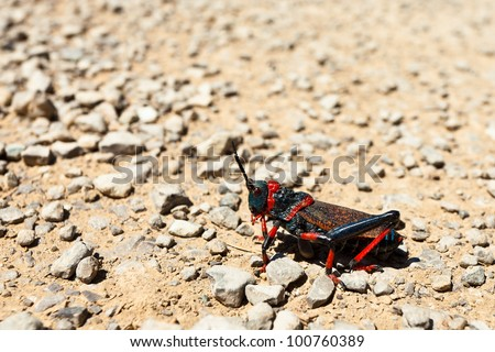 closeup of a  grasshopper sitting on the ground