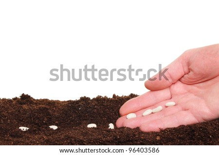 Closeup of a hand planting seeds into a furrow in soil against a white background - stock photo