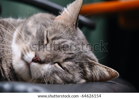 closeup of a head of sleeping cat - stock photo