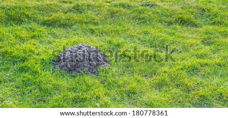 Closeup of a heap of earth in a green lawn recently raised by a mole. - stock photo